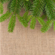 Border from natural branch of fir tree over burlap — Stock Photo