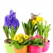Colorful easter decoration with fresh spring flowers - Stock Photo