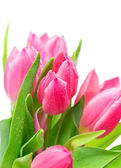 Beautiful spring tulips with water drops — Stock Photo
