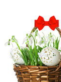 Easter eggs and spring flowers snowdrops — Stock Photo