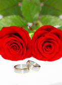 Wedding rings and red roses — Stock fotografie