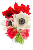Bouquet of red, white and pink anemone flowers — Stock Photo