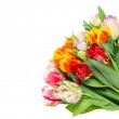 Fresh colorful tulip flowers on white — Stock Photo #19008775
