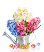 Fresh hyacinth and narcissus flowers with easter eggs — Stock Photo