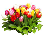 Bouquet of fresh spring tulips — Stock Photo