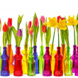 Many tulip and narcissus flowers in colorful vases — Stock Photo #21833961