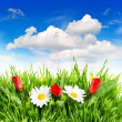 Fresh spring tulip and daisy flowers in green grass — Stock Photo