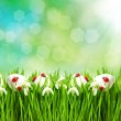 Fresh green grass with flowers and easter eggs — Stock Photo #21838451