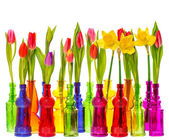 Many tulip and narcissus flowers in colorful vases — Stock Photo