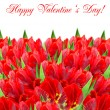 Fresh red tulips on white background — Stock Photo
