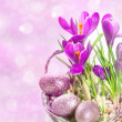 Crocus flowers over blurred background — Stock Photo