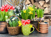 Tulips, snowdrops and narcissus blooms — Stock Photo