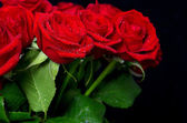 Bouquet of fresh red roses with water drops — Stock Photo