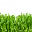 Green grass with water drops on white — Stock Photo #21856133