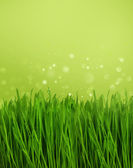 Green grass over blurred nature background — Stock Photo