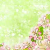 Apple blossoms over blurred green background — Stock Photo