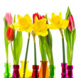 Tulip and narcissus flowers in colorful vases - Stockfoto
