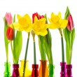 tulip and narcissus flowers in colorful vases — Stock Photo