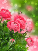 Beautiful pink flowers over blurred background — Stock Photo