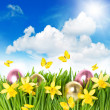 Flower field with narcissus and easter eggs in green grass — Stock Photo