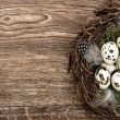 Birds eggs in nest on rustic wooden background — Stock Photo