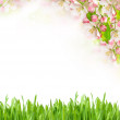Apple tree blossoming and green grass — Stock Photo