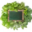 Blank green blackboard with variety fresh herbs — Stock Photo
