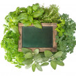 Blank green blackboard with variety fresh herbs - Stock Photo