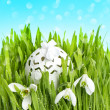 Spring flowers and egg deco in green grass over blue — Stock Photo