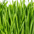 Closeup of fresh green spring grass with water drops — Stock Photo