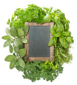Blank blackboard with variety fresh herbs — Stock Photo