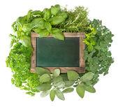 Lousa verde em branco com ervas frescas de variedade — Foto Stock