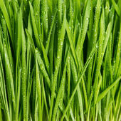 Closeup of fresh green spring grass with wet — Stock Photo