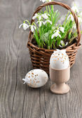 Easter decoration with eggs and snowdrops — Foto de Stock