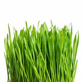 Fresh green spring grass with water drops — Stock Photo