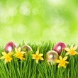 Fresh green grass with narcissus flowers and easter eggs — Stock Photo #21930927