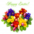 Colorful primula flowers with easter eggs decoration — Foto de Stock