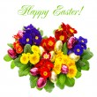 Colorful primula flowers with easter eggs decoration — ストック写真