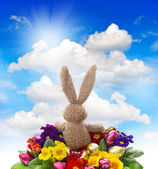 Easter bunny with shiny eggs and colorful primula flowers — Stock Photo