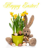 Easter decoration with eggs, narcissus flowers and bunny — Stock Photo
