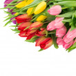Bouquet of fresh tulips over white background — Stock Photo