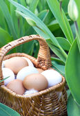 Natural eggs in basket and fresh spring tulips — Stock Photo