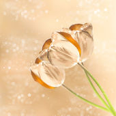 Golden tulip flowers over blurred background — Stock Photo