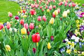花壇で各種色とりどりのチューリップ — ストック写真