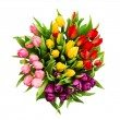 flores frescas tulip multicolor isoladas no branco — Foto Stock