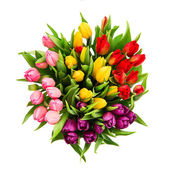 Fresh multicolor tulip flowers isolated on white — Stock Photo