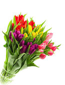 Bouquet of fresh multicolor tulips over white — Stock Photo