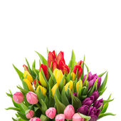 Bouquet of fresh multicolor tulips — Stock Photo
