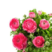 Bouquet of spring pink ranunculus — Stockfoto