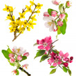 Blossoms of apple tree, cherry twig, forsythia — Stock Photo